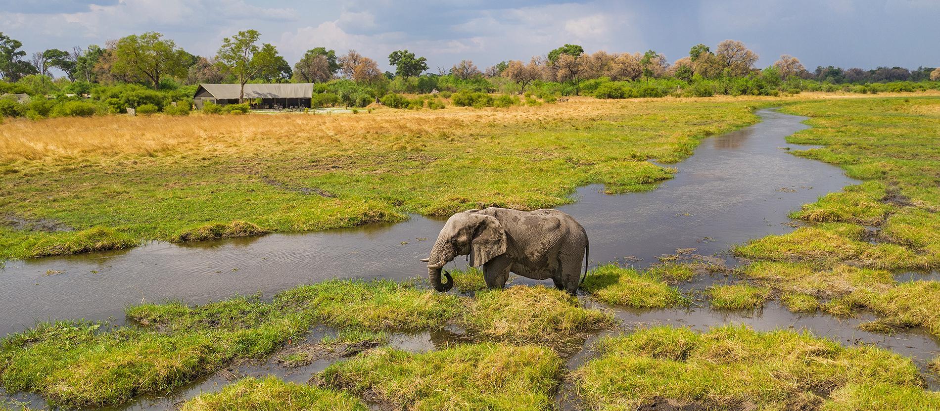 Botswana Photo Safari Amp Wildlife Tour 2020 Amp 2021