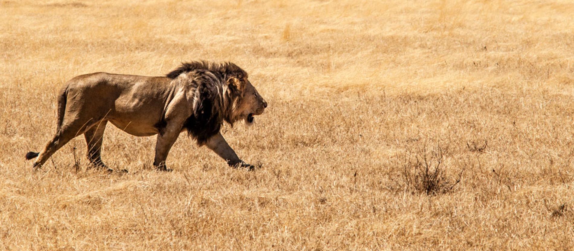 Tanzania Photo Safari: African Safari Photography | National