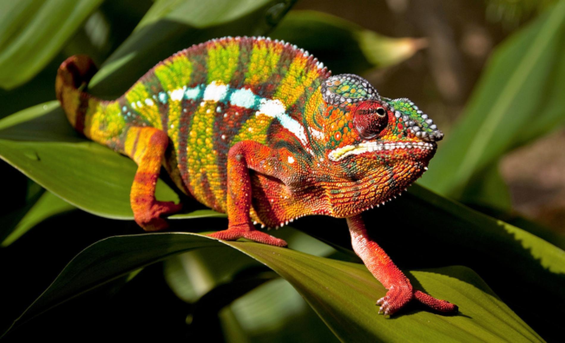 Madagascar Private Expedition