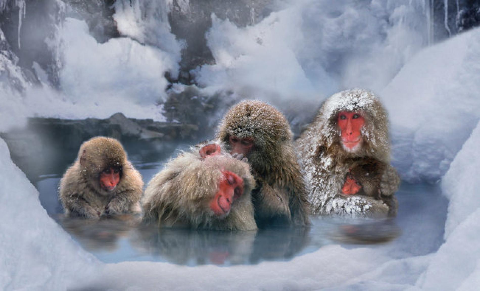 japan winter tours winter festivals snow monkeys. Black Bedroom Furniture Sets. Home Design Ideas