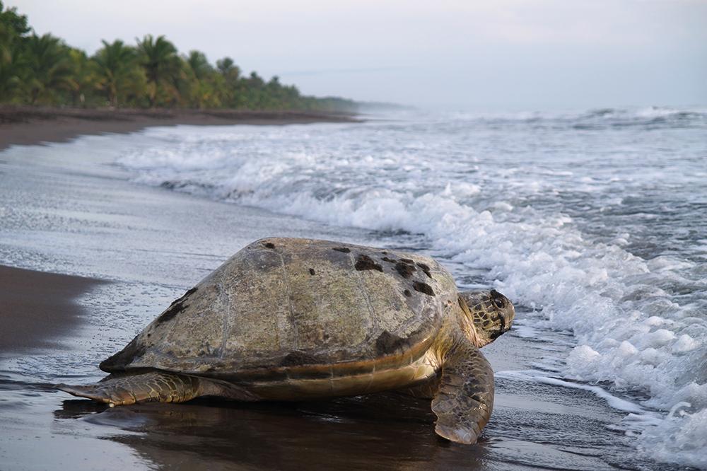 L2 National Geographic Sea Turtles Wildlife Tree Sea Turtle Stuffed Animal