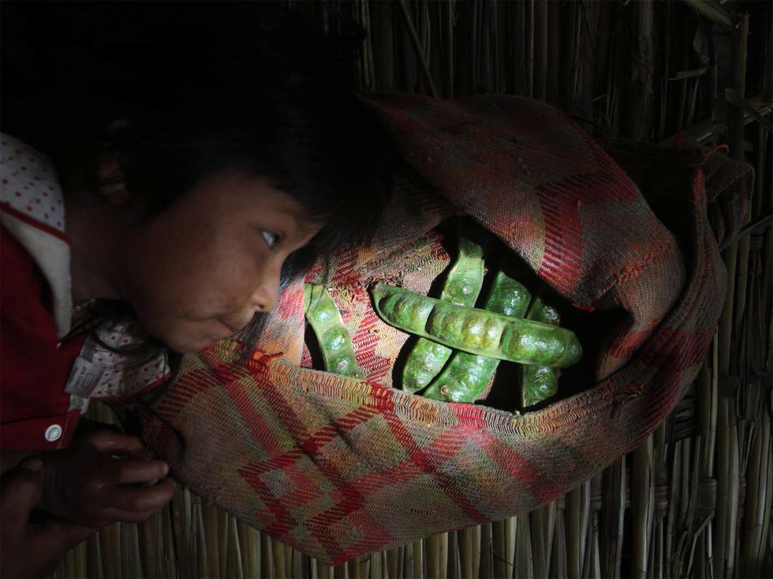 Picture of Tsimane girl