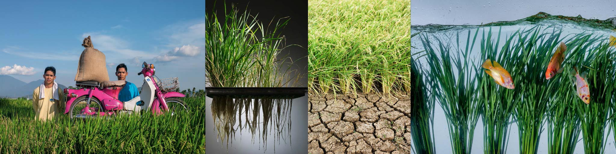 green revolution agricultural production revolution essay Green revolution refers essay on green revolution in 1966-67 the new agricultural policy emphasised the short- term accelerated agricultural production.