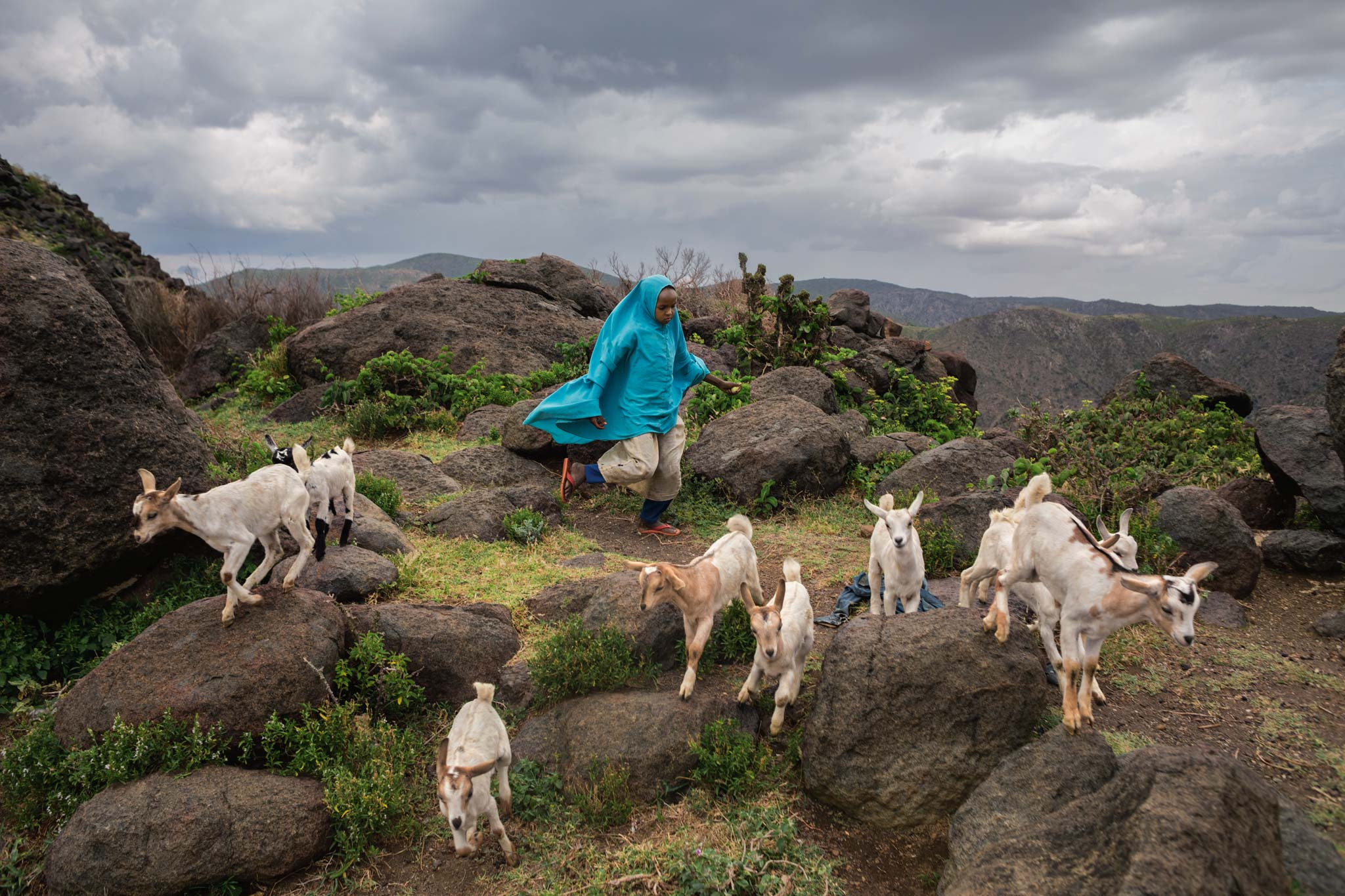 Picture of a girl tending goats in Somaliland