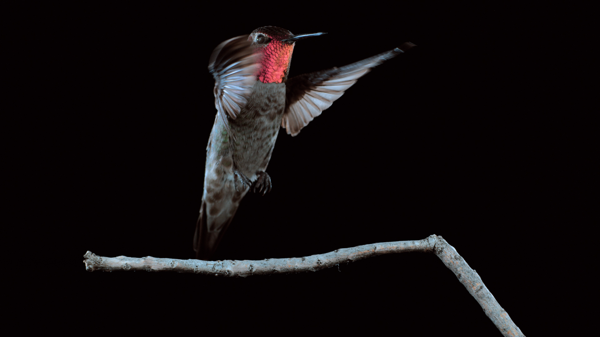 Image result for A Mesmerizing Look at Hummingbirds in Flight - National Geographic
