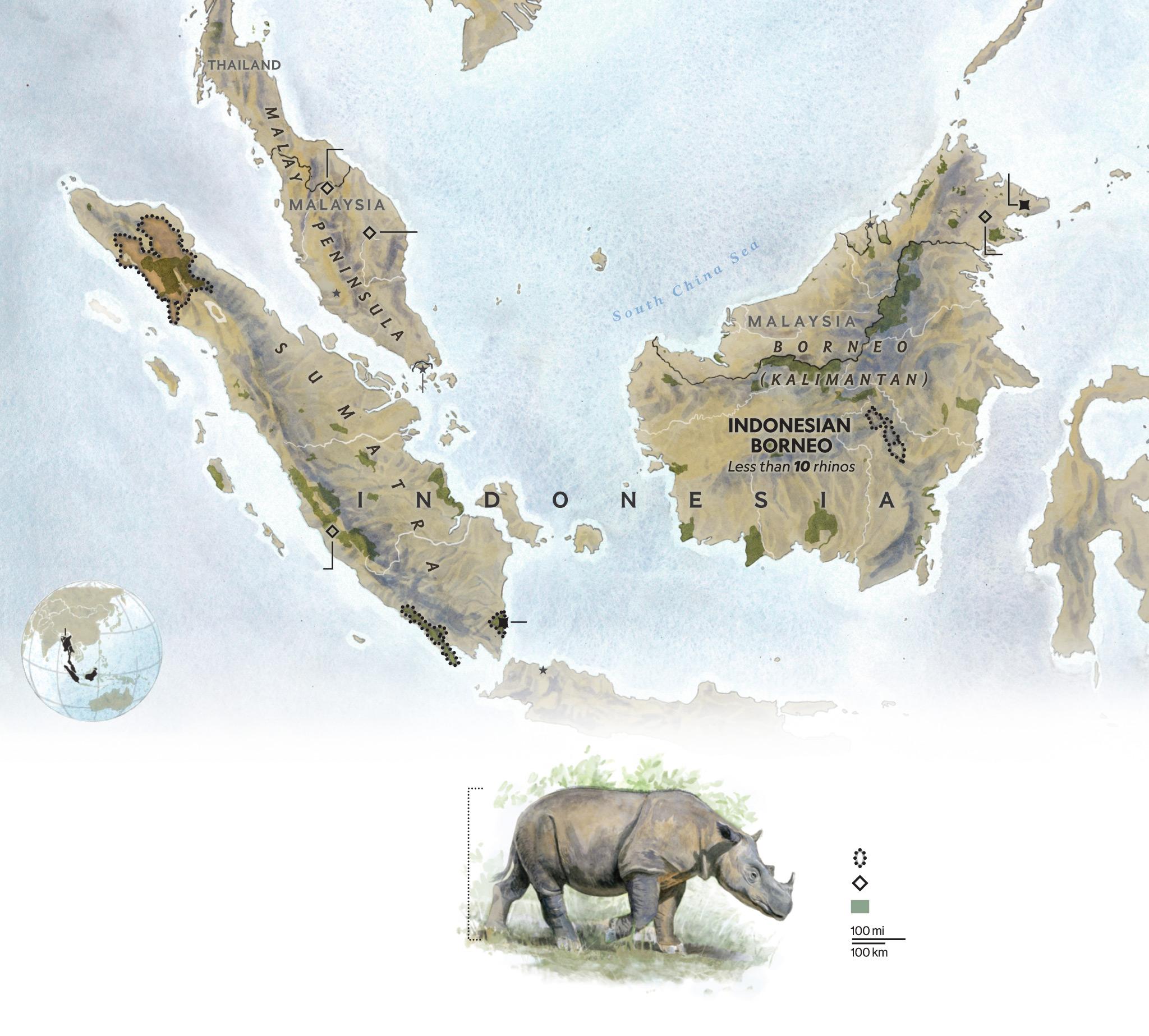 Extinction is looming for Sumatran Rhinos