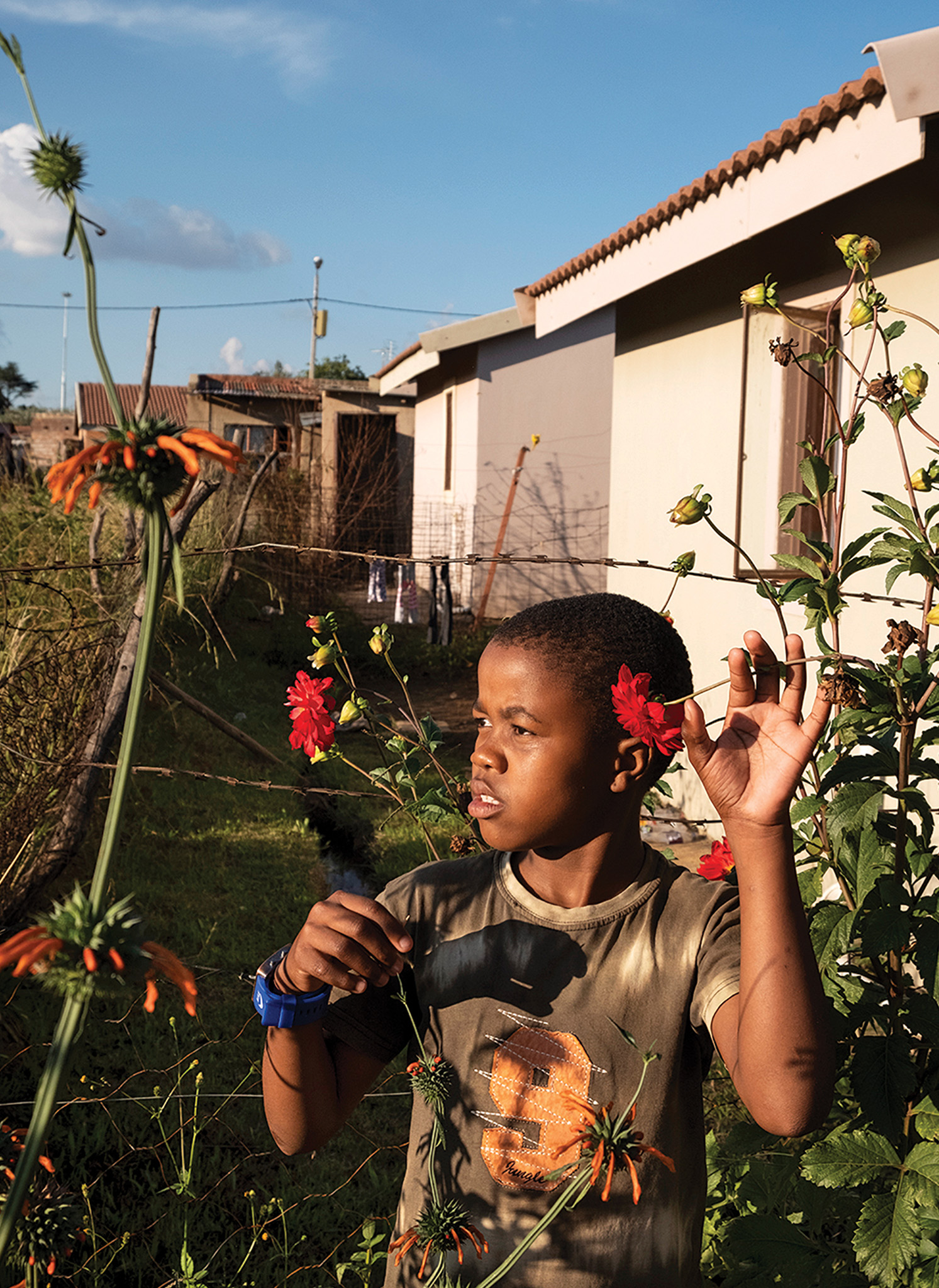 Picture of a young boy among red flowers in a garden