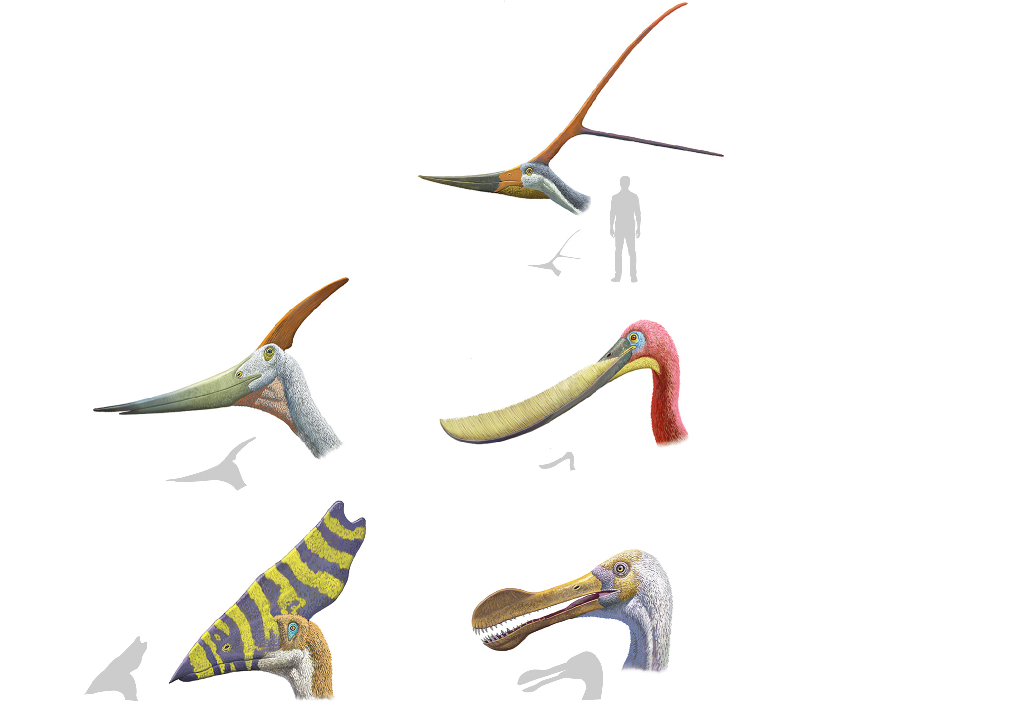Winged Avatars Of Memory And Return >> Why Pterosaurs Were The Weirdest Wonders On Wings