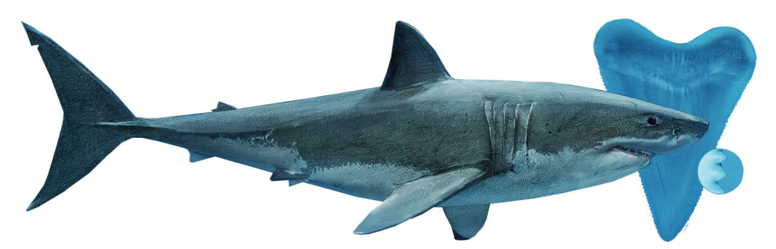 an overview of the shark families in the sea The marlin is more than a great fish locked in an evenly balanced and protracted battle with an accomplished fisherman it is also a creature onto whom santiago.
