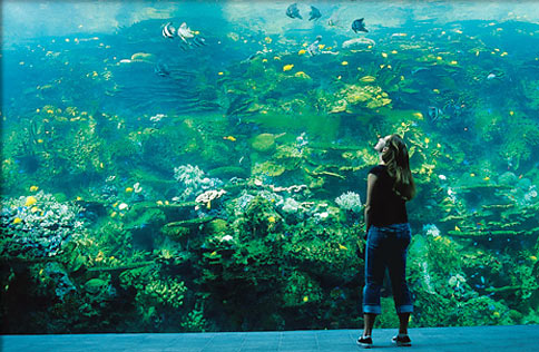 A visitor gets an up-close view of the Georgia Aquariums coral reef exhibit.
